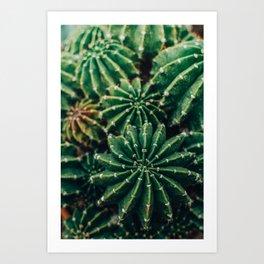 Cactus Study 2 Art Print