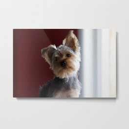 A Dog Named Dante Metal Print