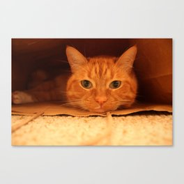 Cat in a Bag Canvas Print