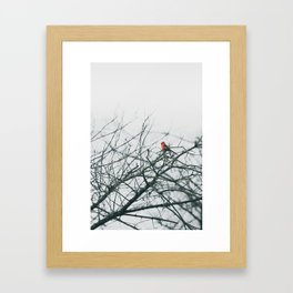 Bird found chirping in Denton Clear Creek Park Framed Art Print