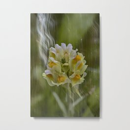 Yellow common Toadflax flower Metal Print