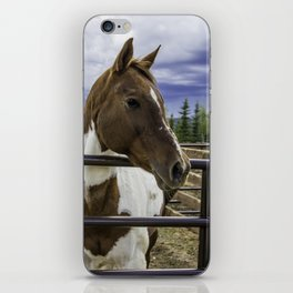 Beautiful Horse with Brown and White Patches Watching a Storm Coming in iPhone Skin