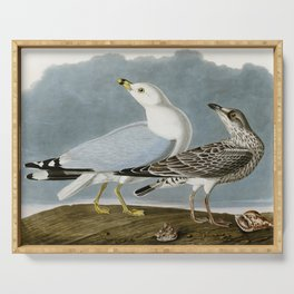 Vintage Seagull Illustration - Audubon Serving Tray