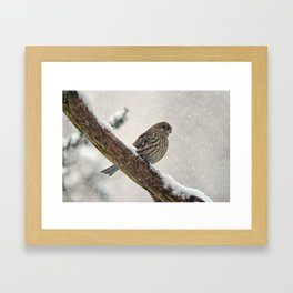 Facing the Storm (House Finch) Framed Art Print