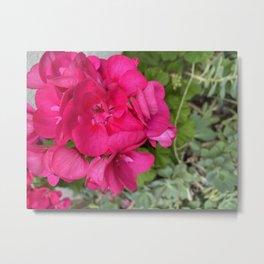 Pinkest flower No-Edit Metal Print