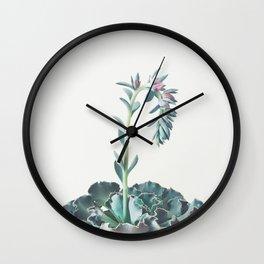 Flowering Succulent II Wall Clock
