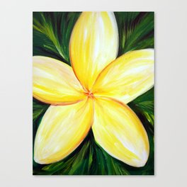 Aloha; White Plumeria Canvas Print