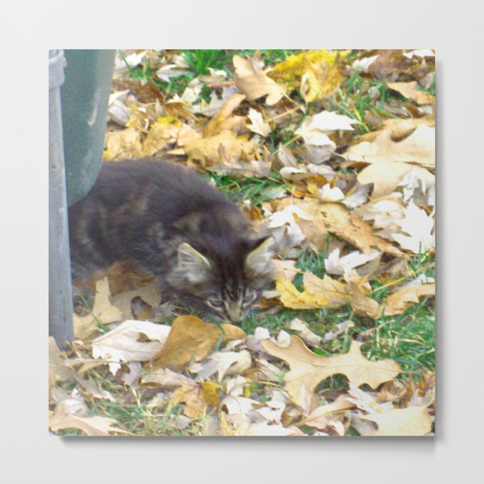 Autumn Kitten Metal Print