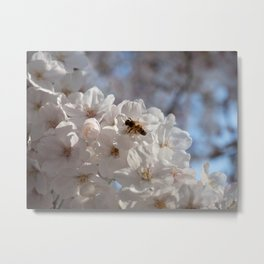 bee in a sea of sakura Metal Print