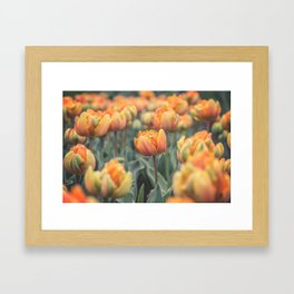 Tulips (Orange Princess) Framed Art Print