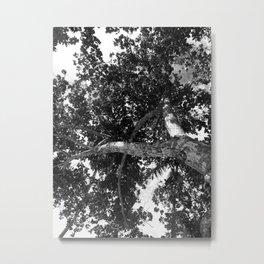 Twist tree Metal Print