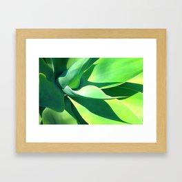 Yucca Plant Framed Art Print