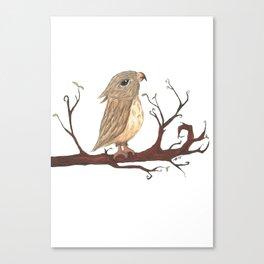 Curious Owl Canvas Print