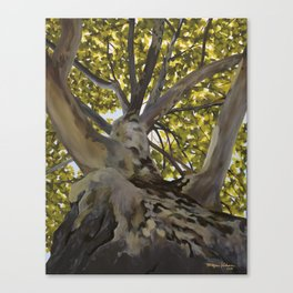 Summer Sycamore Canvas Print