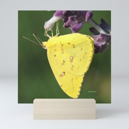 Orange Sulphur Butterfly Mini Art Print