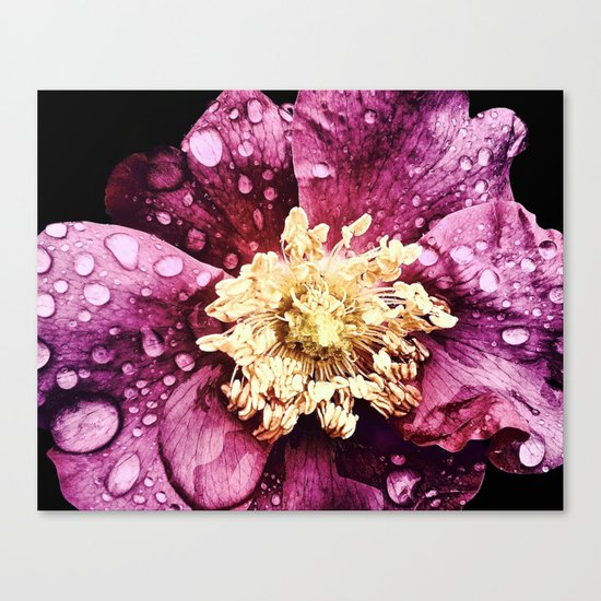Raindrops On Deep Pink Bloom Canvas Print