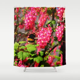 Bumble Bee and Blood Currant Ribes Sanguineum std Shower Curtain