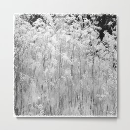 Flower | Flowers | Frosted Ornamental Grasses Metal Print