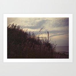 grasses2 Art Print