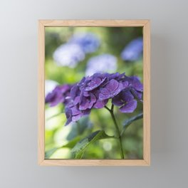 Hydrangea Bliss Framed Mini Art Print