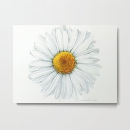 Watercolor Daisy Metal Print