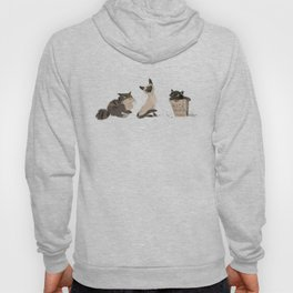 Cats Cats Cats Hoody