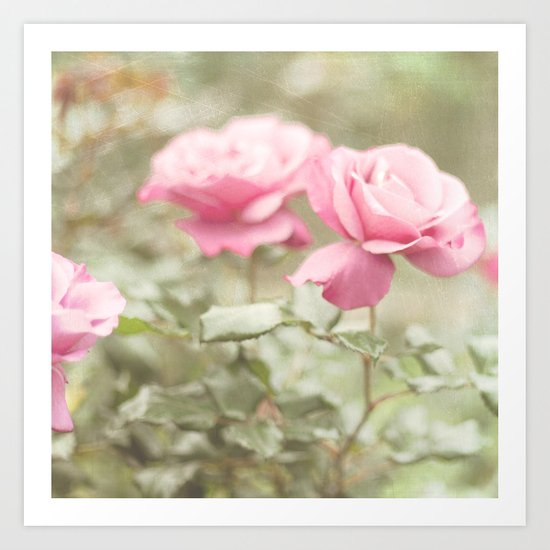 Textured and Pastel roses (vintage flower photography) Art Print