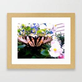 Summer;flies Framed Art Print