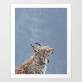 Lynx Yawning, Blue Distressed Background Art Print