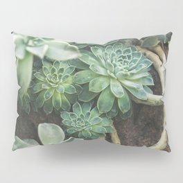 Botanical Gardens - Succulent #625 Pillow Sham