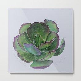 lovely Succulent Plants No.7 Metal Print