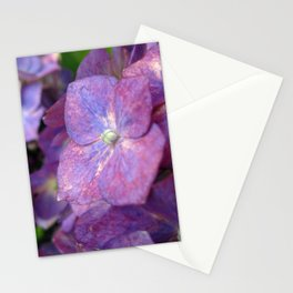Purple and Pink Hydrangeas Photography Stationery Cards