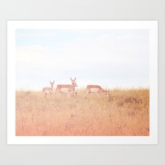 Antelope in Grass Art Print