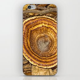 Bracket Fungi on the forest floor iPhone Skin