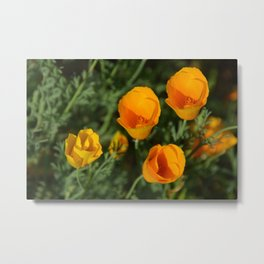 California Poppy - View from above Metal Print