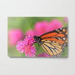 Butterfly Pink Floral by Reay of Light Photography Metal Print