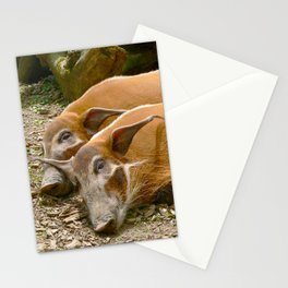 Red River Hogs taking a nap Stationery Cards
