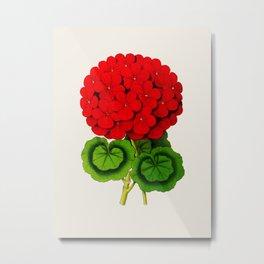 Vintage Scientific Floral Illustration Large Red Flowers Cranesbill Geranium Metal Print
