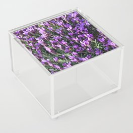 SPANISH LAVENDER AND ONE BEE Acrylic Box