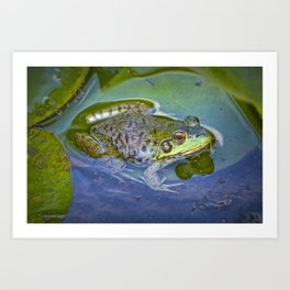 Frog resting on a Lily Pad Art Print