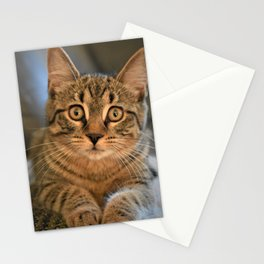 The Beauty of a Cat Stationery Cards