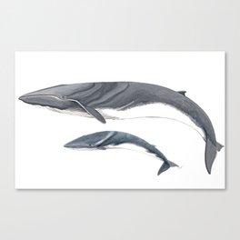 Fin whale Canvas Print