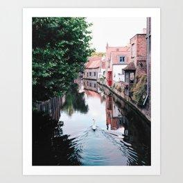 Swan in Belgium Art Print