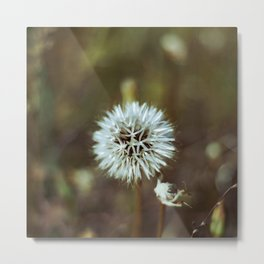 White Stringy Ball Flower  Metal Print