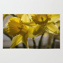 Daffodils in Red Crystal vase from my photography collection Rug