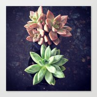 succulents Canvas Prints featuring Succulents  by Yellow Barn Studio
