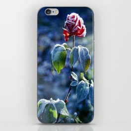 Frosted Rose iPhone Skin