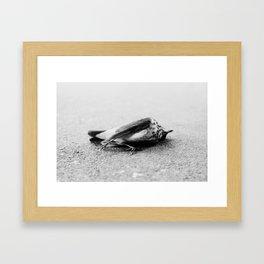 Bird Framed Art Print