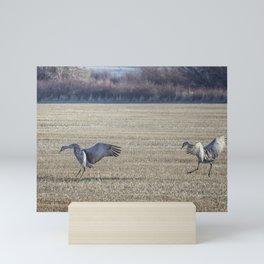 Sandhill Cranes Pair Landing Mini Art Print