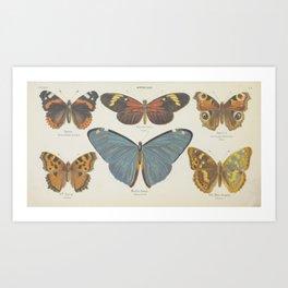 BUTTERFLIES Nymphalidae Art Print